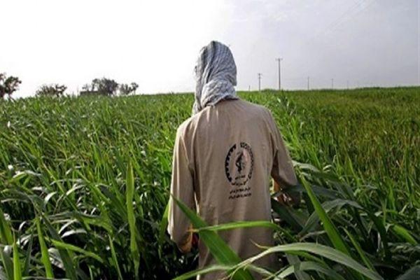 اجرای طرح همگام با کشاورز در ۸۰ روستای شهرستان نهاوند