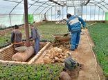 اختصاص ۴۰ هزار میلیارد ریال تسهیلات برای توسعه گلخانهها در سال جهش تولید