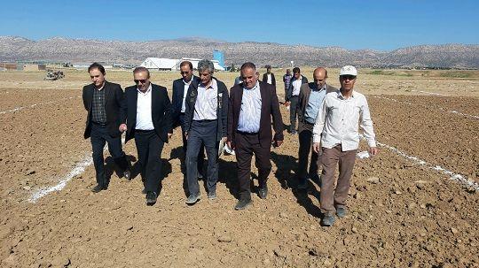 بازدید رئیس سازمان جهاد کشاورزی لرستان از طرح کاشت چغندر قند پائیزه در روستای حاجی مراد
