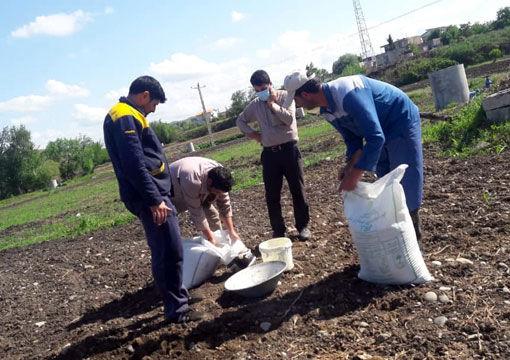 اجرای طرح پایلوت تغذیه پنبه درسطح پنج هکتار در شهرستان خداآفرین