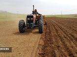 کشت گندم در بیش از600 هزار هکتار از اراضی کردستان