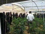 رشد 29  درصدی دوره های آموزشی مهارتی ترویجی کشاورزی در خراسان شمالی