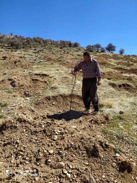 احداث باغ های دیم در اراضی شیبدار سپیدان