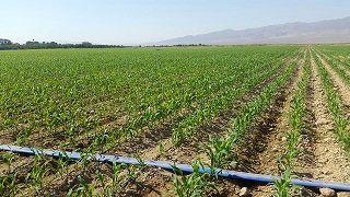 پرداخت 676 میلیارد ریال تسهیلات رونق تولید در بخش کشاورزی استان مرکزی