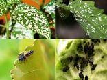 مبارزه بیولوژیک در ۹ هزار هکتار اراضی خراسان شمالی در سال