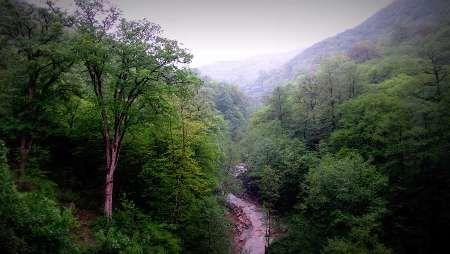 اتمام کاداستر جنگلهای کشور تا پایان سال جاری