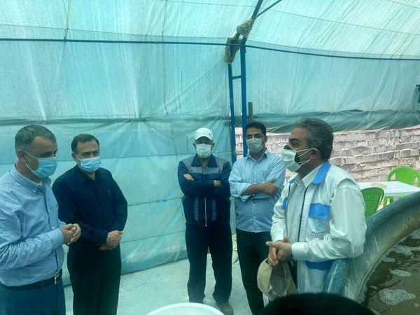 نظارت اداره کل دامپزشکی بر تمامی مراکز پرورش میگو در استان خوزستان