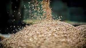 بذر اصلاح شده و ضدعفونی بذر؛ لازمه کشت بهتر