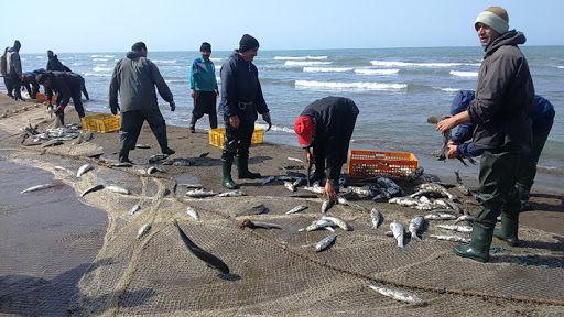 ارزیابی ذخایر ماهیان استخوانی در سواحل دریای خزر