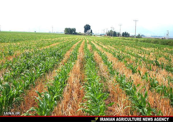 کشاورزی حفاظتی در اراضی خراسان رضوی اجرایی شد