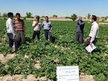 برگزاری بازدید ترویجی سیب زمینی از طرحهای استقرار کشاورزی پایداردر شهرستان بناب