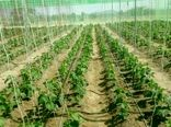 کشت محصولات گلخانه ای در سیستان و بلوچستان آغاز شد
