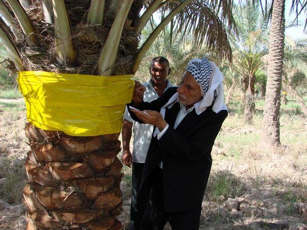 روز جهانی بدون سم روزی برای بایدها و نبایدهای بخش کشاورزی