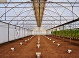 احداث مجتمع گلخانه ای با هدف ایجاد اشتغال برای فارغ التحصیلان کشاورزی