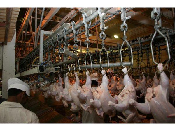 خرید تضمینی 5300 تن مرغ در مازندران