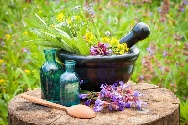 گیاهان دارویی پتانسیل جایگزینی نفت را دارند
