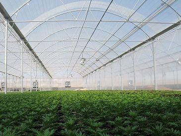 تحقق 43 درصدی اهداف و برنامههای مصوب و ابلاغی گلخانه های کشور