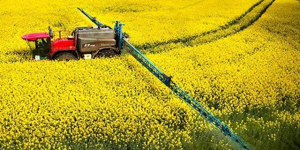 برگزاری کارگاه آموزشی شناسایی و مدیریت علفهای هرز در مزارع کلزا و گندم در شهرستان ارزوئیه