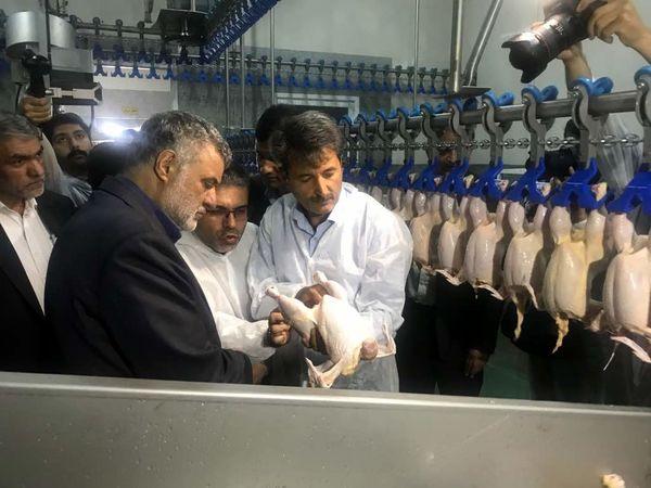 زنجیره گوشت مرغ در استان اصفهان تکمیل شد