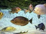 توسعه پرورش ماهیان زینتی اصفهان مستلزم تکمیل زنجیره تولید است