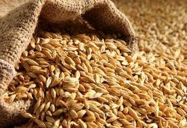 دامداران جو را از سامانه بازارگاه تهیه کنند