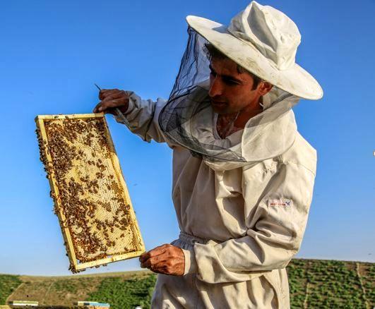 افزایش ۱۰ درصدی تولید عسل در شهرستان مرزی راز و جرگلان