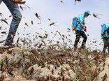 ردیابی و پایش ملخ صحرایی در حدود 10 میلیون هکتار از استانهای جنوبی