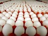 صادرات 11 هزارتنی تخممرغ از ابتدای امسال