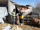 ارائه خدمات رایگان دامپزشکی در شهرستان سامان