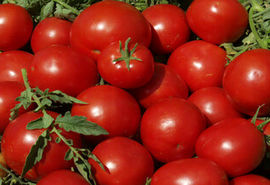 صادرات گوجه فرنگی کشاورزان بوشهری تا اطلاع ثانوی بلامانع اعلام شد
