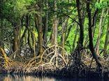 فراخوان حمایت از طرحهای پژوهشی در زمینه جنگلهای مانگرو خلیج فارس