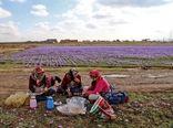 ضریب پوشش بیمه روستایی شیروان بیشتر از میانگین استانی است