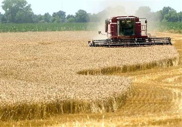دو برابر شدن خرید تضمینی گندم از کشاورزان