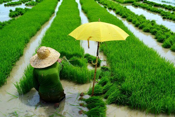 کشاورزی در خوزستان پایلوت موفق در پایداری منابع آب