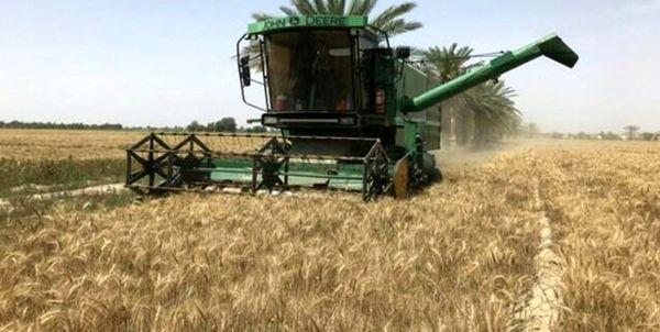 پیشبینی برداشت ۱۴ هزار تن گندم آبی و دیم از مزارع چادگان