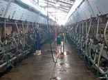 پیشبینی تولید 400هزار تنی شیر در استان مرکزی