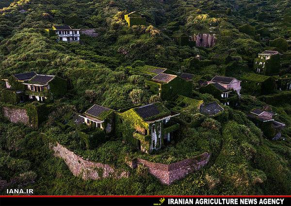 روستایی در محاصره گیاهان