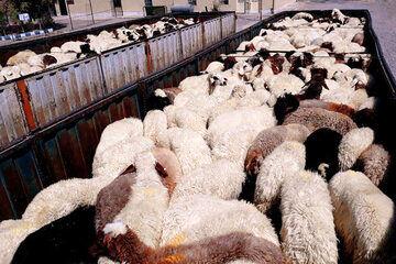 هزینه 40 میلیون ریالی عشایر در ایام کوچ کرونایی