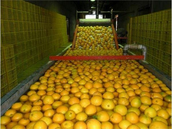 افزایش 55 هزار تنی ظرفیت سورتینگ میوه و مرکبات در نکا