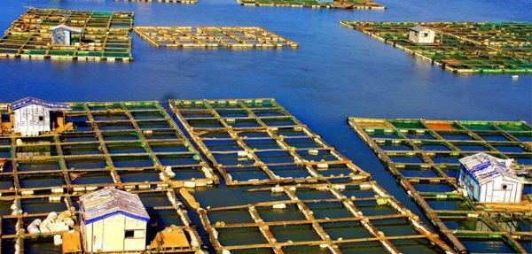 کشاورزی زیر آب: راهحل سهبعدی برای زمین و دریا