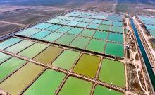 ۲۹ هزار تن میگوی پرورشی در استان بوشهر تولید میشود