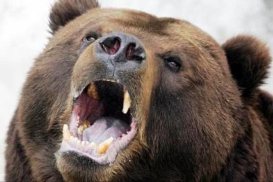 حمله شبانه خرس به روستای کندازی