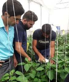 اولین گلخانه بیولوژیک در مرودشت راه اندازی شد