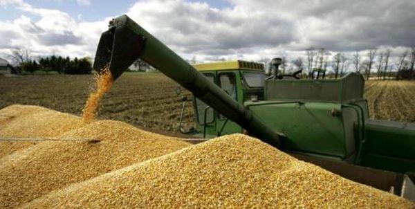 انجام خرید تضمینی 22500 تن گندم در شهرستان اهر