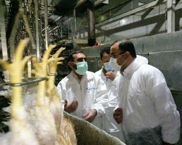 مردم نگران تولید گوشت مرغ در استان نباشند