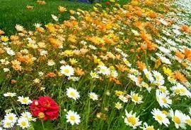 اجرای طرح توسعه گیاهان دارویی در ۲ هزار هکتار اراضی خراسان شمالی