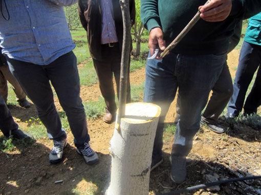 آموزش هرس و پیوند درختان میوه در شهرستان اهر