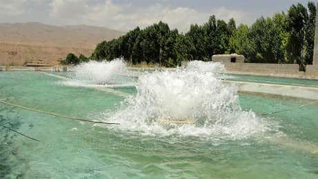 دوره آموزشی پرورش ماهی در استخرهای ذخیره آب کشاورزی در شهرستان آبیک برگزار شد
