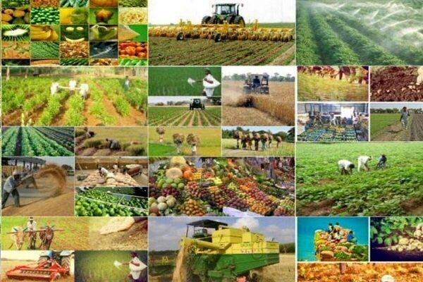 تحقق توسعه کشاورزی صنعتی با  توانمندسازی نظامهای بهرهبرداری