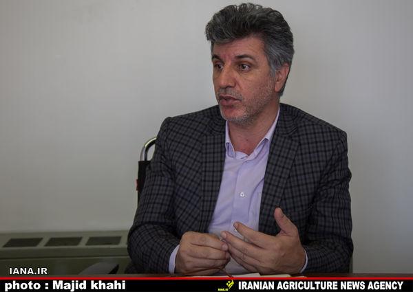 کشت پنبه جایگزین برنج در استان گلستان